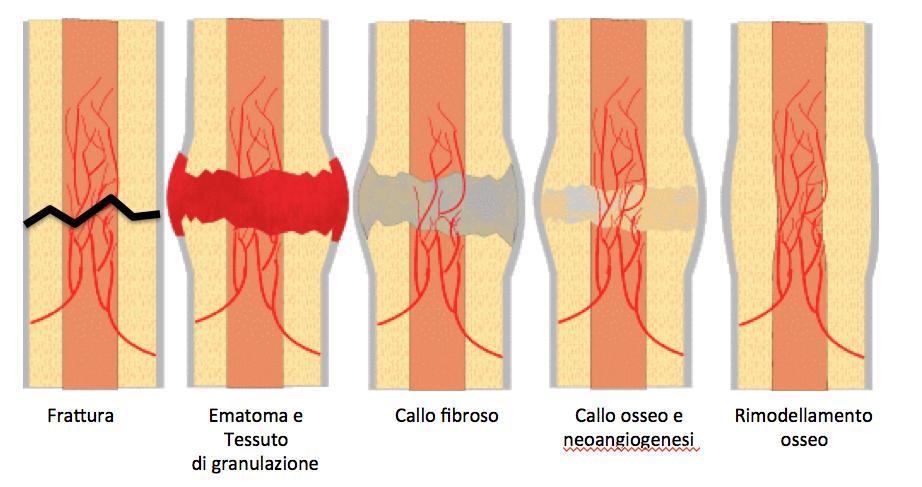 tecniche di datazione ossea